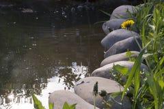 Überwucherter Teich Lizenzfreie Stockfotografie