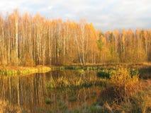 überwucherter Teich an einem Herbstabend Stockbilder