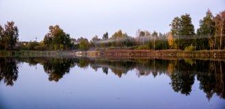 Überwucherter Teich im Wald Forest Swamp stockfoto