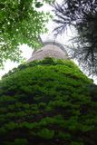 Überwucherter Turm Stockfoto
