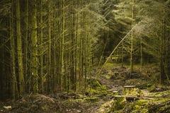Überwucherter Wald in Dartmoor Lizenzfreie Stockfotografie