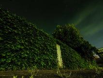 Überwucherter Zaun mit Sternen Stockbilder