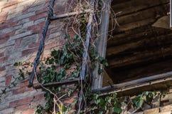 überwuchertes Fenster der Villa Lizenzfreies Stockbild