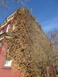 Überwuchertes Georgetown-Haus Lizenzfreie Stockfotografie