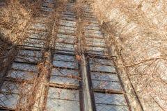 Überwuchertes Kirchenfenster im Detail stockfotografie