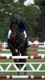 Überzeugter Mitfahrer und Pferd Lizenzfreie Stockfotos