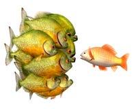 Überzeugung Konzept, Goldfish und Piranhas Stockbilder