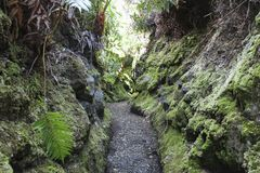 Üppige Dschungelspur Kilauea Iki im Vulkan-Nationalpark, große Insel, Hawaii stockbild