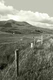 Üppige Felder von Irland Stockbild