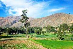 Üppige Grün-Felder in Peru Lizenzfreies Stockfoto