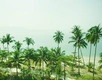 Üppige grüne Palmen Stockbild