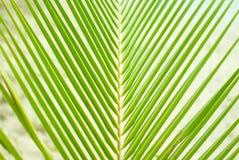 Üppige grüne Palmenniederlassung Lizenzfreie Stockfotos