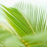 Üppige grüne Palmenniederlassung Stockfoto