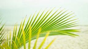 Üppige grüne Palmenniederlassung Stockfotos