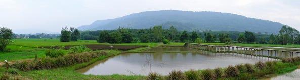 Üppige grüne Reisfelder des Panoramas der Landschaft Lizenzfreie Stockfotos