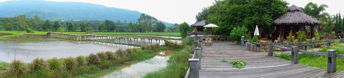 Üppige grüne Reisfelder des Panoramas der Landschaft Stockbilder