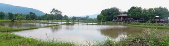 Üppige grüne Reisfelder des Panoramas der Landschaft Lizenzfreies Stockbild