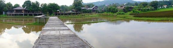 Üppige grüne Reisfelder des Panoramas der Landschaft Stockfotografie