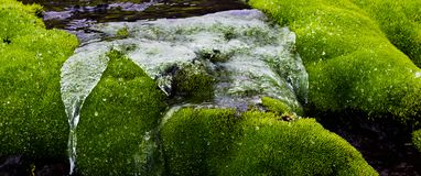 Üppige, grüne und saubere Natur stockbild