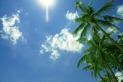 Üppige Palmen mit Hintergrund des blauen Himmels Stockfoto