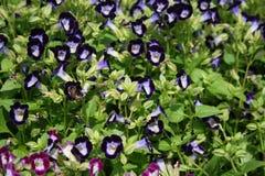 Üppige purpurrote Blume schön stockfoto