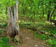 Üppige Waldspur stockbilder