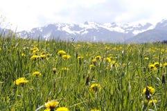 Üppige Wiese in den Alpen Stockfotografie