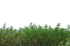 Üppiger Busch des grünen Grases lokalisiert auf weißem Hintergrund Lizenzfreies Stockfoto