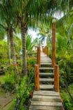 Üppiger Dschungel-Weg zum Strand lizenzfreie stockfotografie