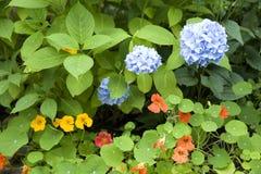 Üppiger Garten Lizenzfreies Stockbild