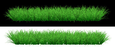 Üppiger grüner grasartiger Rasen auf einem Hintergrund Stockbild