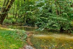 Üppiger grüner Sumpf, Ökologie, grüner Sumpf im Wald, Naturlandschaft lizenzfreies stockbild