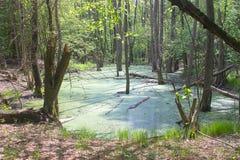 Üppiger grüner Sumpf Die Sonne ragt durch das starke Laub empor lizenzfreie stockfotos