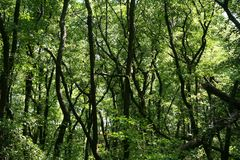 Üppiger grüner Sumpf Die Sonne ragt durch das starke Laub empor, um eine herrliche Naturlandschaft aufzudecken stockfoto