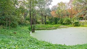 Üppiger grüner Sumpf Die Sonne ragt durch das starke Laub empor, um eine herrliche Naturlandschaft aufzudecken stockbild