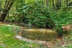 Üppiger grüner Sumpf und tropische Waldszene Die Sonne ragt durch das starke Laub empor, um eine herrliche Naturlandschaft aufzud stockfoto