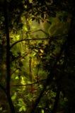 Üppiger grüner Wald Stockbild