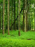 Üppiger grüner Wald Stockfotografie