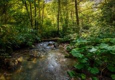 Üppiger grüner Wald mit ruhigem Strom Stockbilder