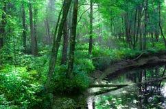 Üppiger grüner Wald, Sun-Strahlen und geschwollener Fluss- weg von Funktelegrafie 302 Fryeburg, Maine - Juni 2014 - durch Eric L  Lizenzfreie Stockfotografie