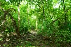 Üppiger tropischer Dschungel stockfotografie