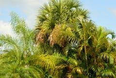 Üppiger tropischer Hintergrund Stockfotografie