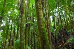 Üppiger utropical Palmenwald lizenzfreie stockbilder