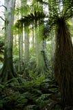 Üppiger Wald Stockbild