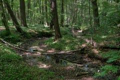 Üppiger Wald lizenzfreies stockfoto