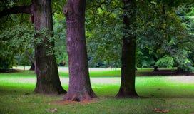 Üppiger Wald Stockfotografie