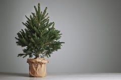 Üppiger Weihnachtsbaum auf grauem Hintergrund Lizenzfreies Stockfoto