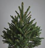 Üppiger Weihnachtsbaum auf grauem Hintergrund Stockbild