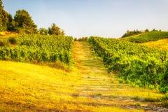 Üppiges Ackerland in der hügeligen Landschaft Lizenzfreies Stockfoto
