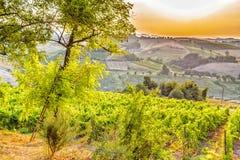 Üppiges Ackerland in der hügeligen Landschaft Stockfotos